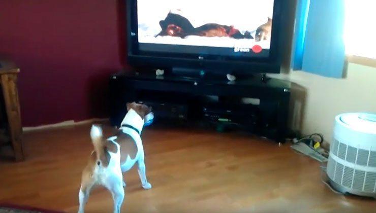 Hund vor dem Fernseher