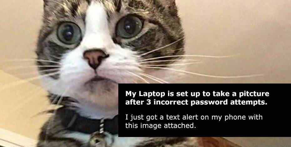 Meme Katze
