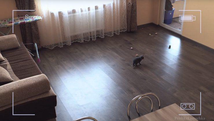 Katze alleine daheim